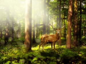 magic-forest-1785325_640